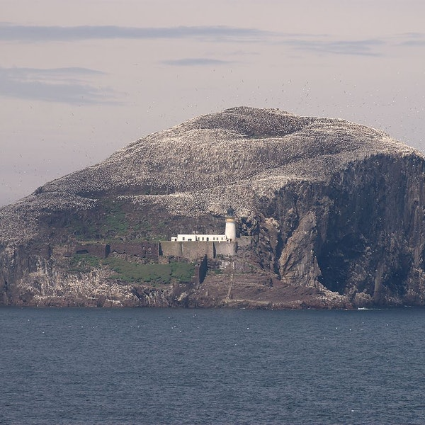 Bass Rock Lighthouse And Castle